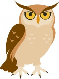 2-22-13 owl