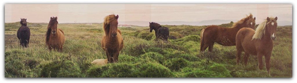 Horses Grazing Religious Worship Background